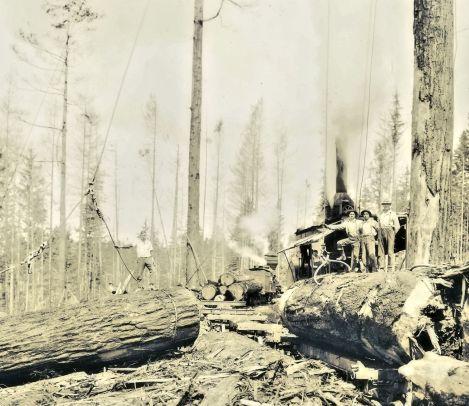 Logging Photo 2 clarified w tint